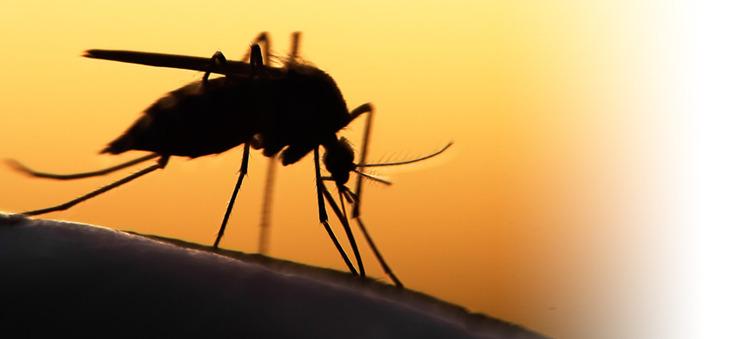 Mücke sticht.