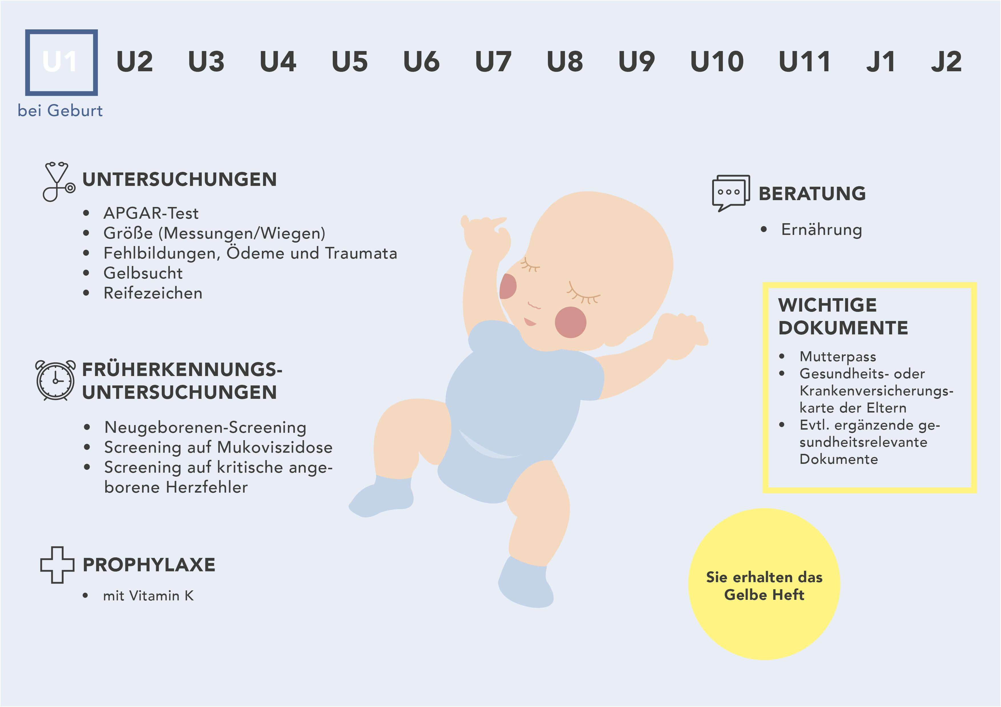 Fakten zur U1-Untersuchung - Grafische Darstellung