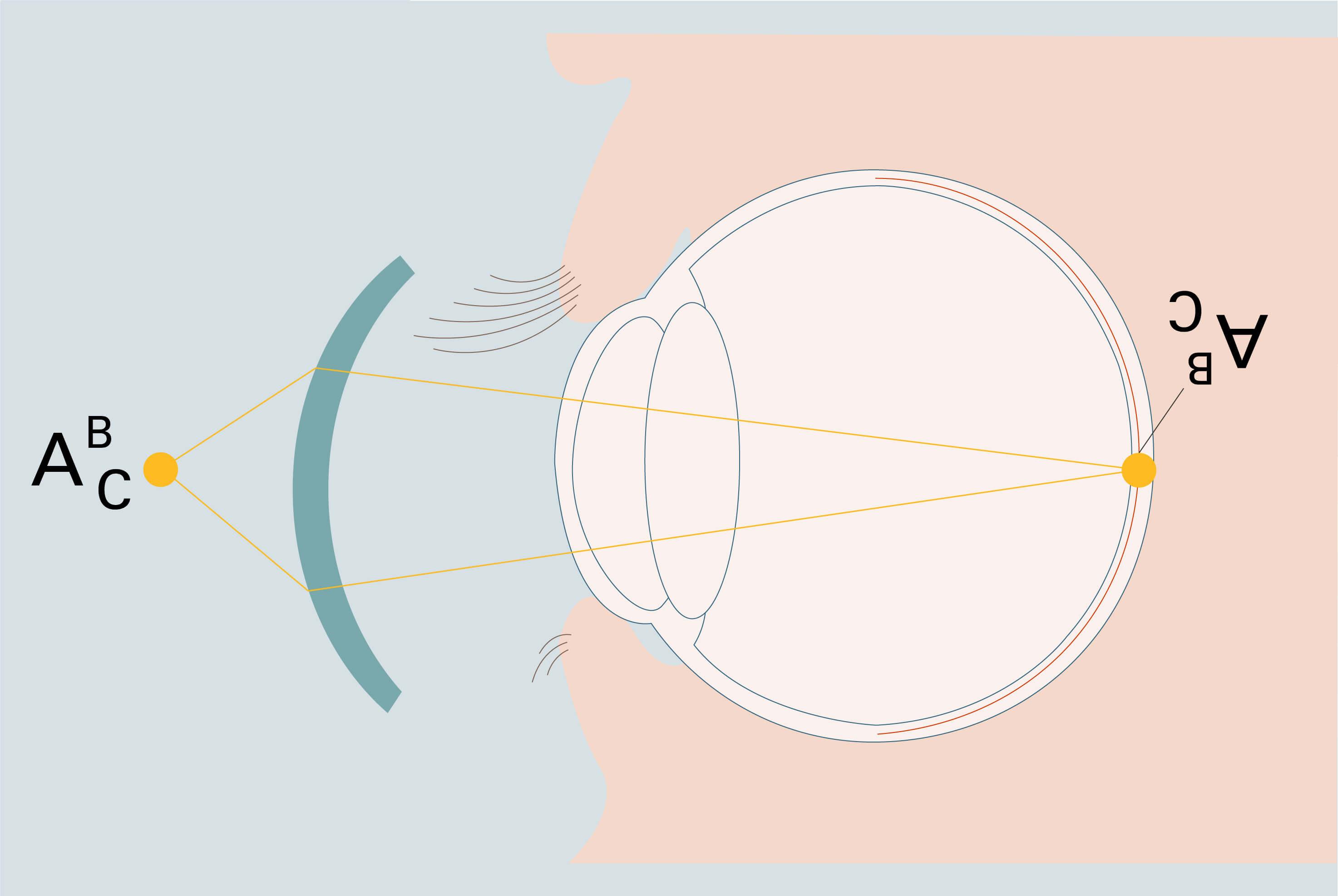 Querschnitt des Auges mit Brennpunkt auf der Netzhaut - Grafische Darstellung