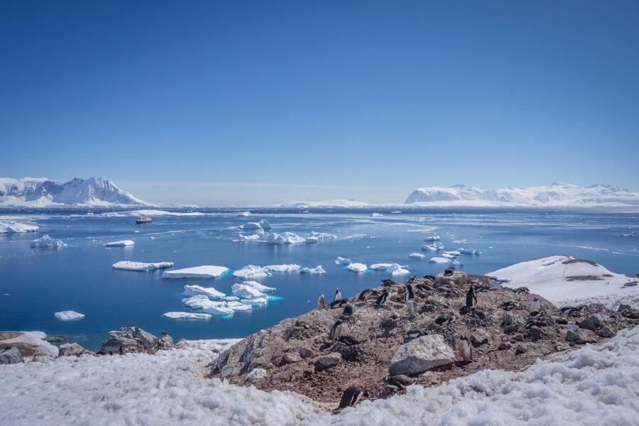 Pinguine auf einer antarktischen Insel; im Hintergrund Wasser, Eisschollen und ein Schiff.